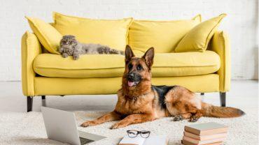 Avoir un animal de compagnie en appartement : est-ce vraiment une bonne idée?